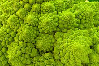 A+broccoli+is+a+natural+fractal+_0c5c0705156a1ae5cdc24a61e5b8383c.jpg