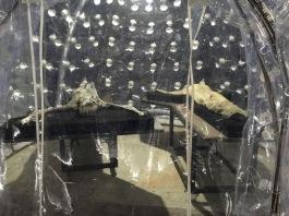 57.-Esposizione-Internazionale-dArte-Venezia-2017-Padiglione-Italia-Giorgio-Andreotta-Calò-Senza-titolo-La-fine-del-mondo-photo-credit-Andrea-Ferro-3-1