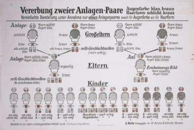 A eugenics chart entitled -A eugenics chart entitled Hereditary traits passed down from two mates--2